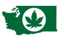 Washington-State-Marijuana